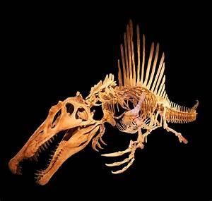 Spinosauridae Wikipedia