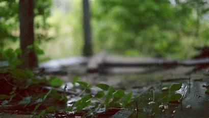 Rain Gifs Animated Caress Nature Positive Energy