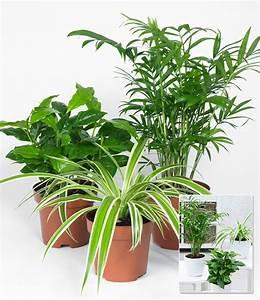 Zimmerpflanzen mix 39tropic39 1a zimmerpflanzen online for Garten planen mit hängende zimmerpflanzen kaufen