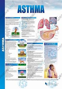 asthma brochure template 28 images asthma awareness With asthma brochure template