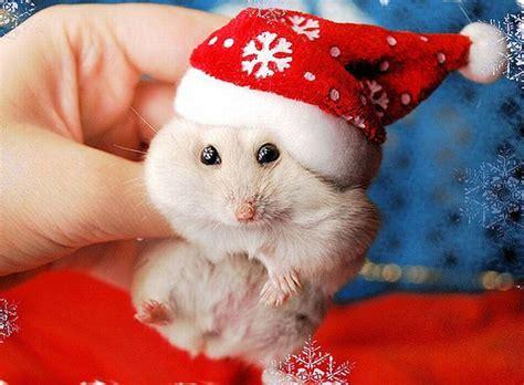 beautiful animals in christmas 20 photos of cute animals enjoying christmas