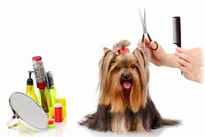 dog grooming services groom dog at home dog brush With dog grooming at home