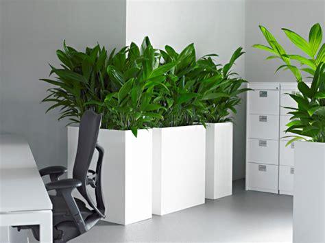 plante verte bureau plante bureau photos de magnolisafleur