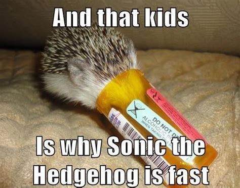 Hedgehog Meme - image 601554 sonic the hedgehog know your meme