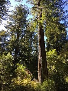 Big Basin Redwoods State Park, Santa Cruz County ...