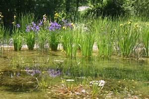 Plante Filtrante Pour Bassin : baignade cologique et naturelle la filtration biologique bionova ~ Louise-bijoux.com Idées de Décoration