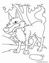 Coloring Wolf Coyote Bad Peter Jungle Para Printable Page11 Fox Pdf Colorear Popular Dog Coloringhome Dibujos Coloringpages101 Desenho Imprimir sketch template