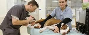 Veterinary Technician Agriculture