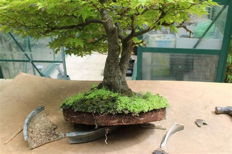 bonsai summer images 2014