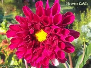 Blumen Im Juli : der garten im juli katekit 39 s garten ~ Lizthompson.info Haus und Dekorationen