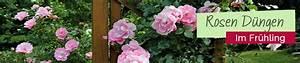 Rosen Düngen Im Frühjahr : rosen d ngen im fr hjahr mit organischem bokashi d nger ~ Orissabook.com Haus und Dekorationen