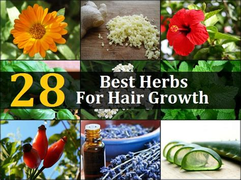 28 Best Herbs For Hair Growth  Gardens With Purpose