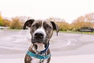 Cool Dog Collars Male | petswithlove.us