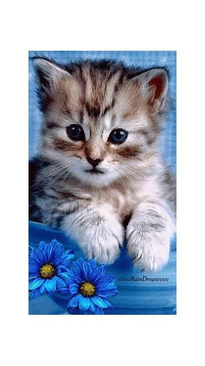 Cats Kittens Animals Animated Cat Kitten Kitty