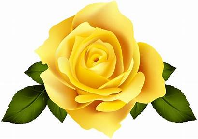 Yellow Rose Flower Clipart Flores Roses Clip
