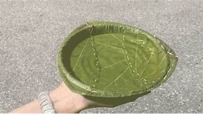 Plates Leaves Leaf Recyclable Plate Serving Responsive