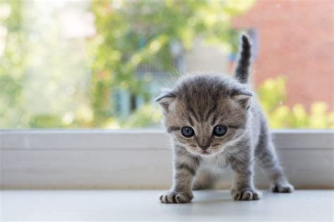 Kitten Images Kitten Anxiety How To Keep Your Calm Canna Pet 174