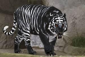 Panther Baby : aww