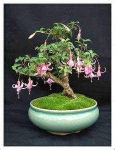 grow wisteria in a pot watch the easy video tutorial With garten planen mit bonsai 7 sub board