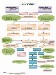 Copd Pathophysiology Diagram