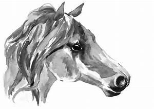 Pferdekopf Schwarz Weiß : pferdekopf aquarell schwarz wei abbildung stockfoto ~ Watch28wear.com Haus und Dekorationen