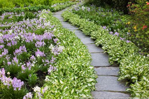walkway plants a lovely and low care garden path