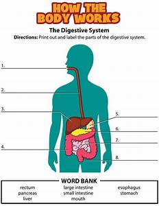 Digestive System  Label  Movie  Quiz      Kidshealth Org  Kid  Closet  Movies  Dsmovie Html