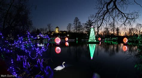 pnc festival of lights tips the cincinnati zoo