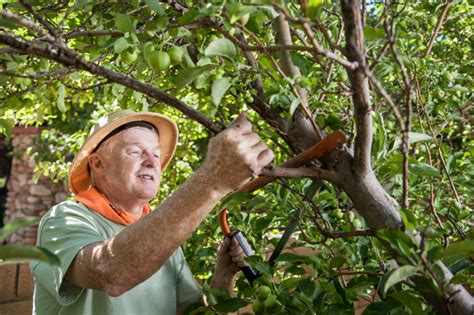 einen alten apfelbaum schneiden  machen sies richtig