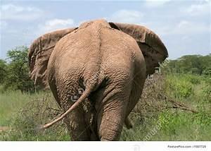 Wildlife Animals  Backside