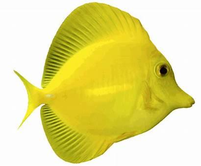 Fish Water Salt Angelfish Clipart Saltwater Clip