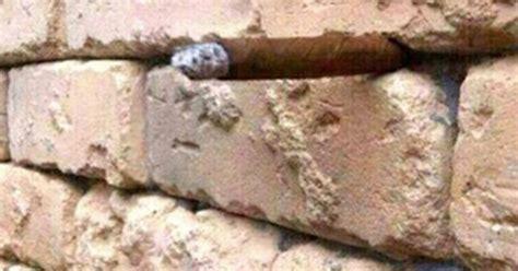 brick wall optical illusion   viral