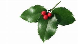 Mistletoe Wallpaper - WallpaperSafari