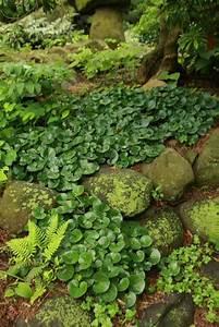 Pflanzen Für Schattengarten : die besten 17 ideen zu schattengarten auf pinterest schattenspendende pflanzen ~ Sanjose-hotels-ca.com Haus und Dekorationen