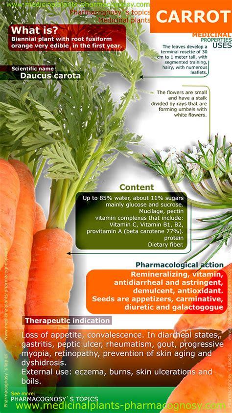 carrot benefits infographic pharmacognosy medicinal