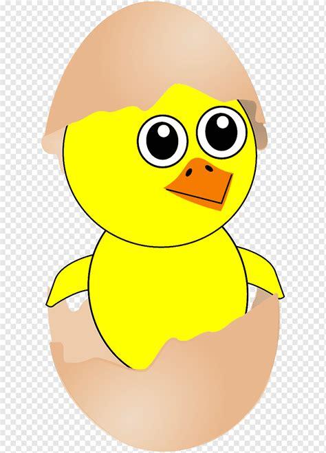 mewarnai gambar telur ayam menetas ayam lucu dari