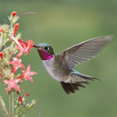how do birds drink water 187 bird watcher s digest