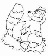 Coloring Nocturnal Raccoon Animals Clipart Animal Colouring Raccoons Popular Coloringhome Library sketch template