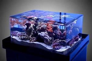 Plexiglas Aquarium Nach Maß : 100 gallon hexagon touch tank set by zeroedge aquarium ~ Watch28wear.com Haus und Dekorationen