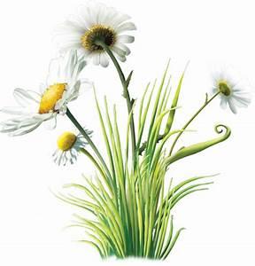 Pot De Fleur Transparent : baron fleurs ussel bouquet ~ Teatrodelosmanantiales.com Idées de Décoration