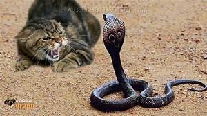 Komodo Dragon Vs Snake | www.pixshark.com - Images ...