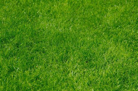 Grass Wallpaper Background · Free Photo On Pixabay