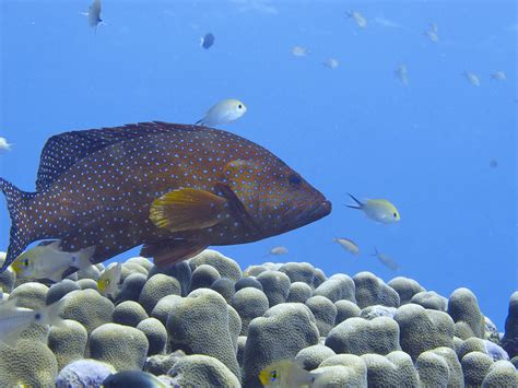grouper groupers super coral instagram series