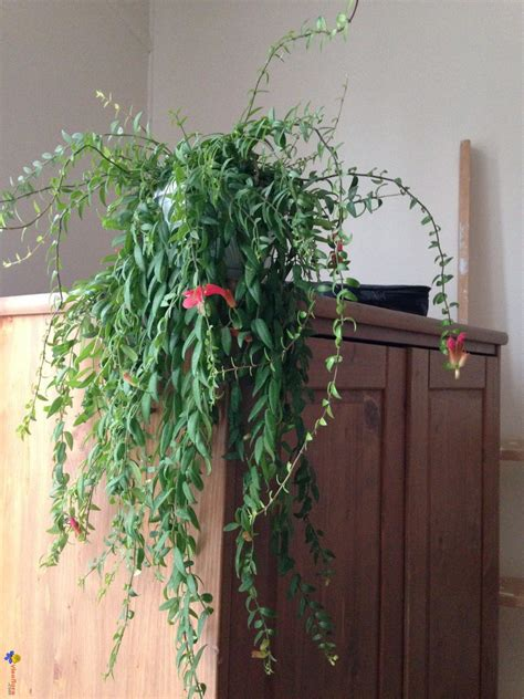 plante verte appartement