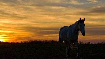 Horse Painting Wallpapers Painted Nature Ultra Lonely