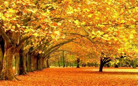Autumn Season Hd Wallpapers by Beautiful Autumn Season Wallpapers Hd Wallpapers