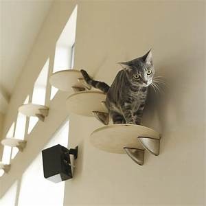 elevation cat wall climbing system fancy