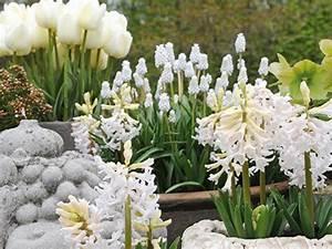 Blumen Für Schattigen Balkon : wei e blumen kombinieren drei ideen f r den balkon ~ Orissabook.com Haus und Dekorationen