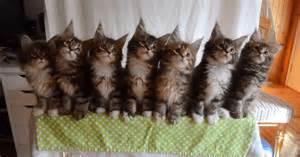 猫:何匹かの猫が、まったく同じ動きをする4つの映像を ...