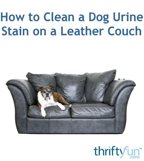clean  dog urine stain   leather couch thriftyfun